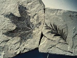 fossili.tif